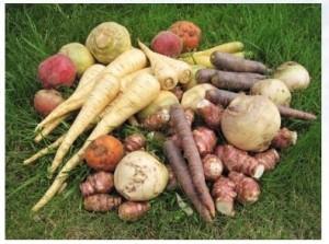 UCPT légumes et horticulture en Bretagne - La game de légumes anciens produits par l'UCPT