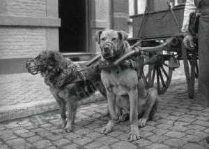 seeberger attelages de chiens